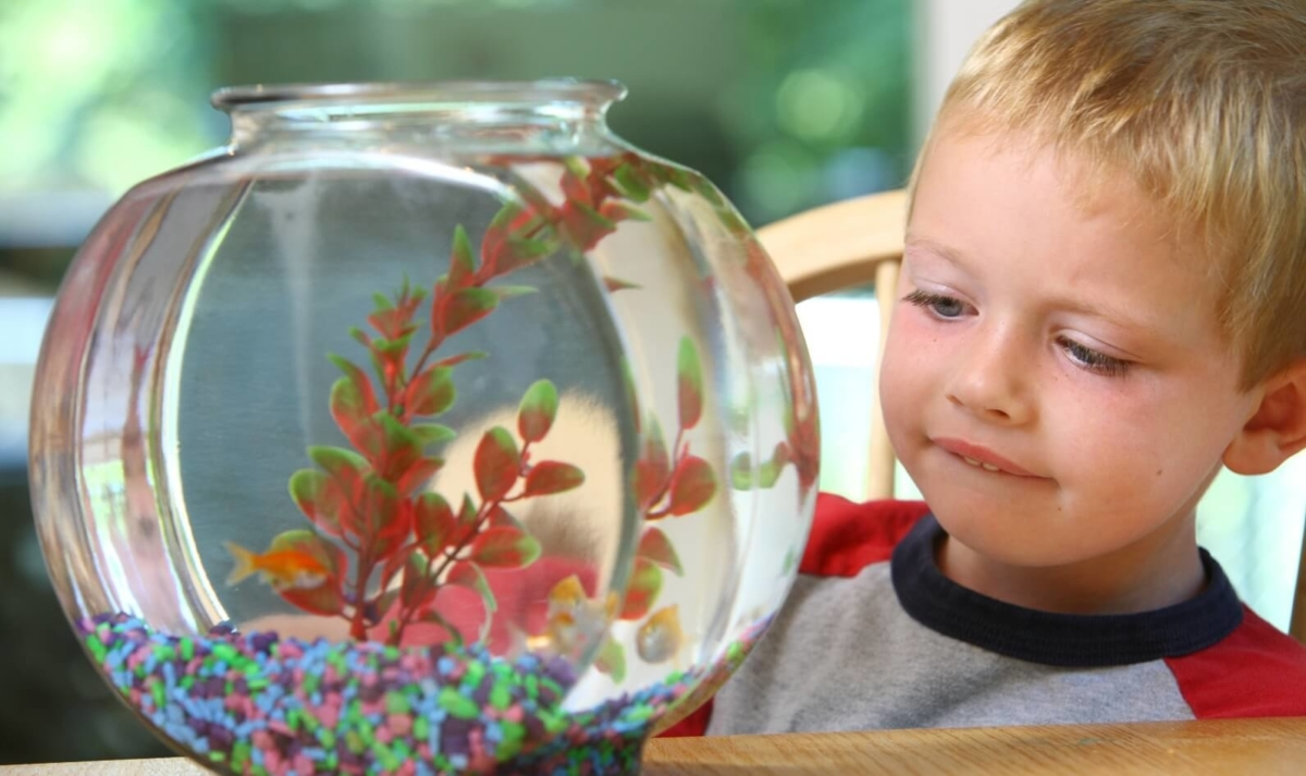 How Caring for Living Things Helps Kids Build Empathy